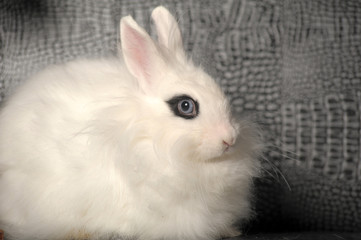 white rabbit with black stroke around the eyes on a gray background