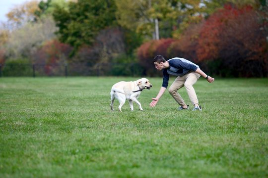 Teenage boy playing fetch with a stick and his labrador dog