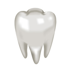 Object white tooth molar, vector