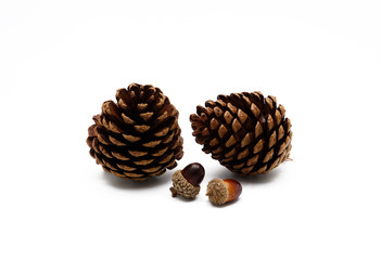 Pine cone and acorn ornament on white background