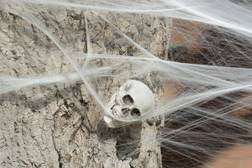 Halloween skeleton skull enveloped and held by white spider web