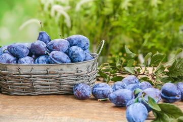 Ripe plums in basket and on wooden table outdoors