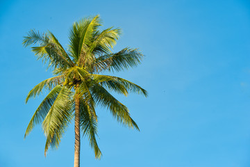 Palm tree and blue sky with blank