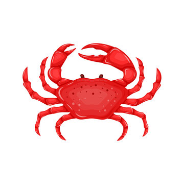 Flat red crab isolated on white background - vector illustration. Sea water animal icon with claws. Seafood product design