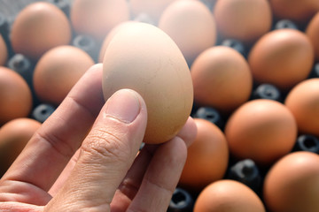 Selection quality of fresh egg.