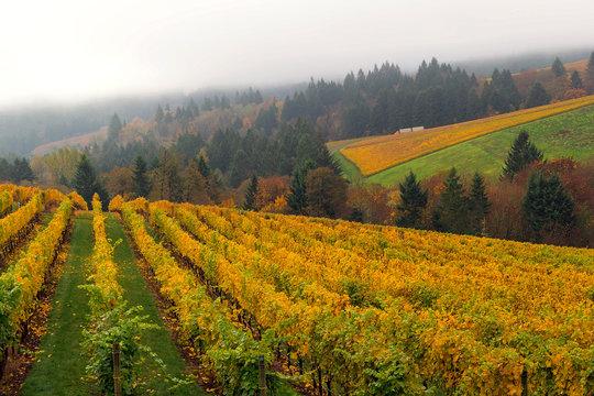 Oregon Vineyard in Fall Season USA America
