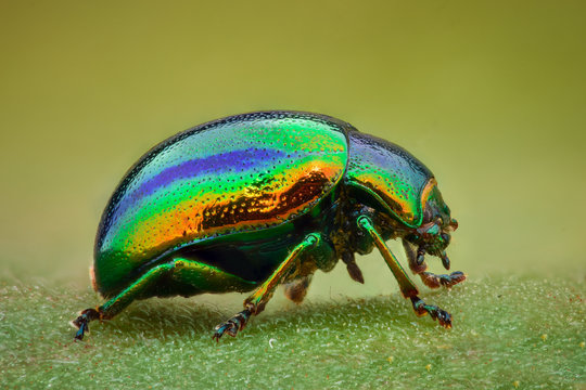 Extreme magnification - Green jewel beetle