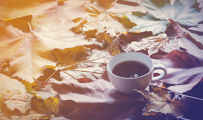 White Cup of coffee with maple leaves around.