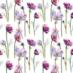 Wildflower aster flower pattern in a watercolor style. Full name of the plant: aster. Aquarelle wild flower for background, texture, wrapper pattern, frame or border.