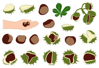 Set of different horse chestnuts isolated on white