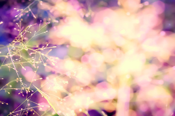 colorful spring grass flower abstract nature background
