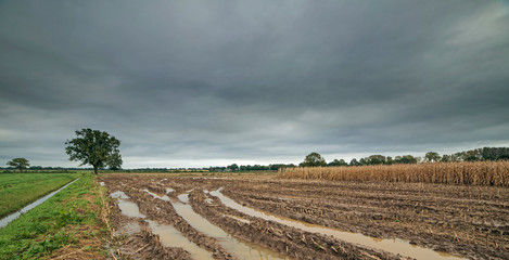 Acrylic Prints Village Tire tracks with rainwater in arable field under dark cloudy sky