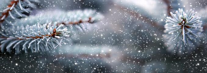 Foto auf Acrylglas Grau Blue fir tree branches with snowfall.