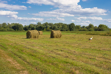 Haystack on background of field and grass. Beauty sustainable rural landscape.