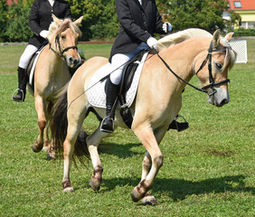 Women are horseback riding at the meadow