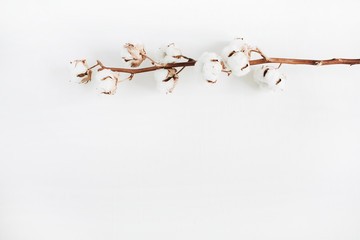 Cotton branch isolated on white background. Flat lay, top view.