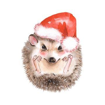 Hedgehog in Santa hat. Cartoon watercolor illustration
