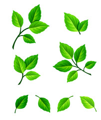 Vector set of green leaves and branches isolated on a white background.