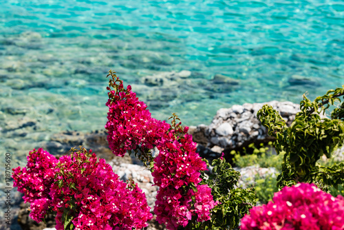 Pink flowers on the mediterranean coast in the peloponnese greece pink flowers on the mediterranean coast in the peloponnese greece mightylinksfo