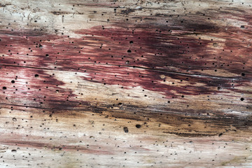Colorful cut of wood spoiled by termites