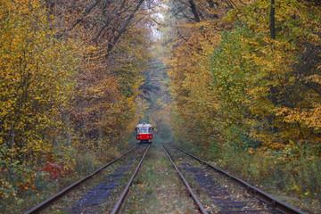 Red tram ride through an autumn forest. Transport