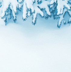 Winter background with snow-covered branches of  christmas tree