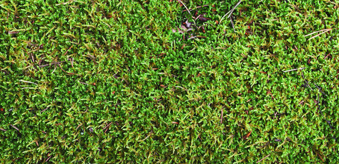 Green moss, panorama, view from above