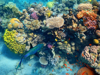 fishes living in the coral of the Red Sea, Eilat, Israel