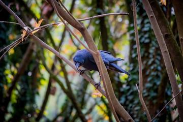 Le corbeau dans les branches d'arbre