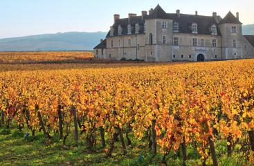 Vignes et château du clos de Vougeot