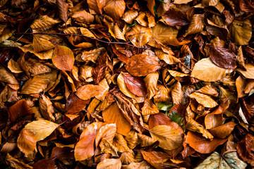 Herbst Laub autumn