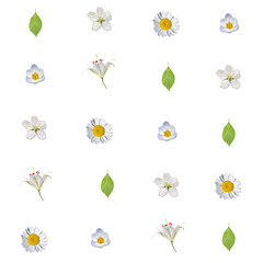 Seamless pattern with white flowers and green leaves on a white background