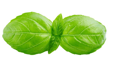Keuken foto achterwand Natuur basil leaf