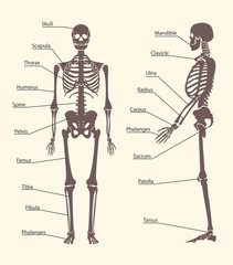 Silhouette Black Human Skeleton and Part Set Card Poster. Vector