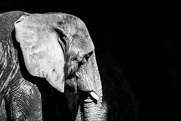 Old Elephant