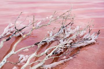 Pink Lake - Dimboola