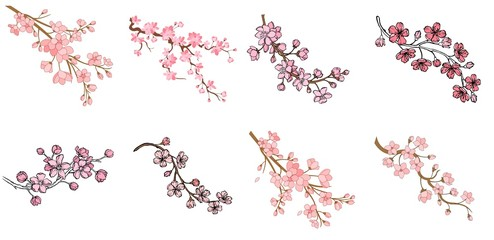 Vector sakura branch illustration isolated on white background. Ink painting for your design. Wall mural