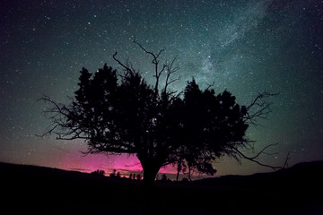 Western Juniper Tree and Pink Northern Lights with Milky Way