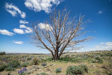 Dramatic single dead snag in the desert