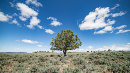 Lone juniper tree speaks of innovation and new landscapes