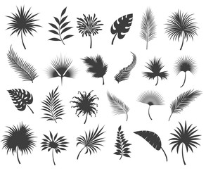Palms leaves silhouettes isolated on white background. Tropical coconut and banana jungle palm leaf or frond silhouette set, vector illustration
