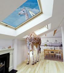 Giraffe in the attic window