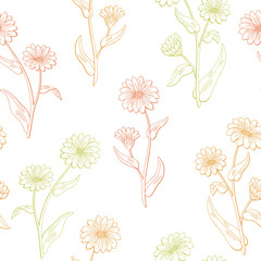 Calendula flower graphic color seamless pattern sketch illustration vector