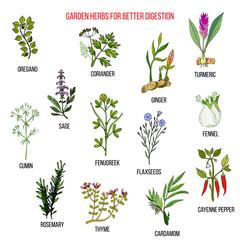 Best garden herbs for better digestion