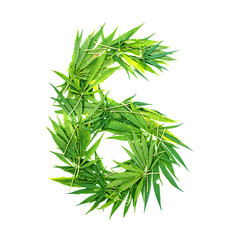 Number six made from green cannabis leaves on a white background. Isolated