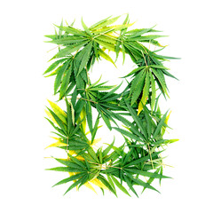 Letter B made of green cannabis leaves on a white background. Isolated