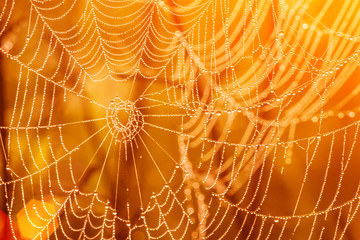 Large spiderweb covered with drops of water at sunset, yellow abstract background