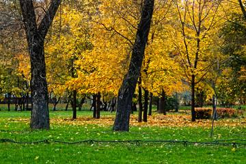 City Park in autumn.