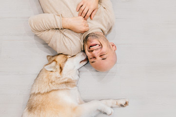 Happy laughing adult man lying on wooden floor. Bald male emotions. Guy with his siberian husky dog at home. Love animals. Domestic mammal puppy licking owner ear. Funny expressive leisure time.
