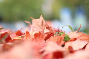 Die Herbstfarben